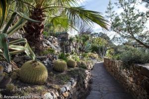 _MG_0931-0020.jardin_mediterraneen