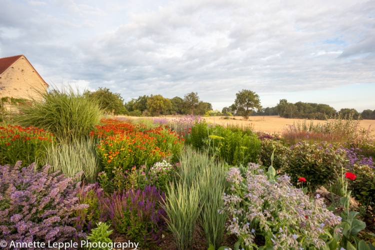 Border with Dutch style planting featuring grasses, Helenium, Salvia, Nepeta