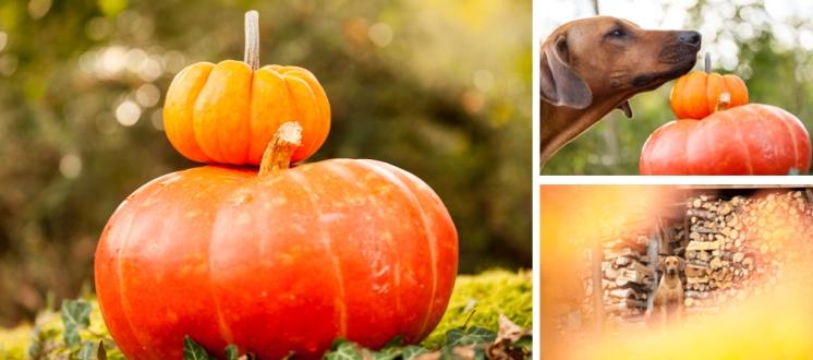 Blog Nov 6